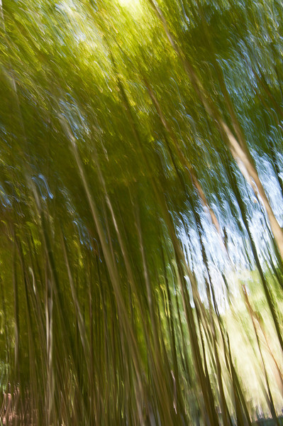 Impression, Bamboo Forest - Séptima