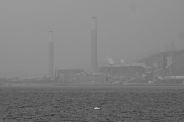 Hong Kong Dolphin Conservation Society - February 2012