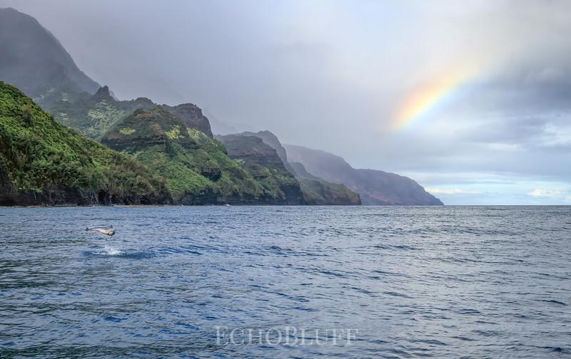 Hawaiian Spinner Dolphin, Na Pali Coast