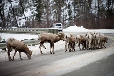 Montana Traffic Jam