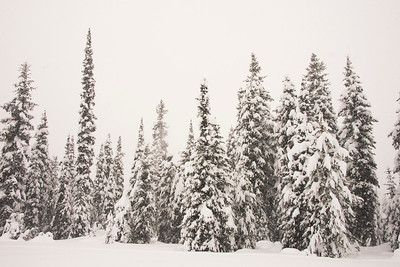 Snow in the Nez Perce