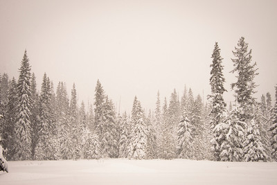 Snow in the Nez Perce National Forest
