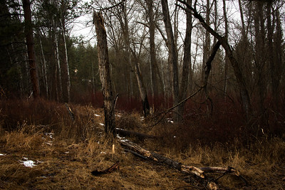 Woods near Maclay Flat