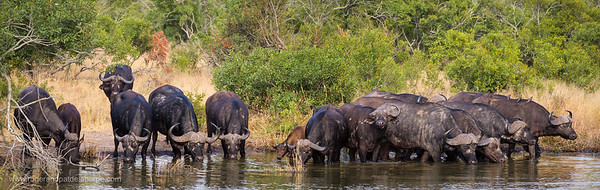 Kruger National Park. Mpumalanga. South Africa.