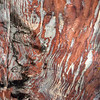 Inside the rock