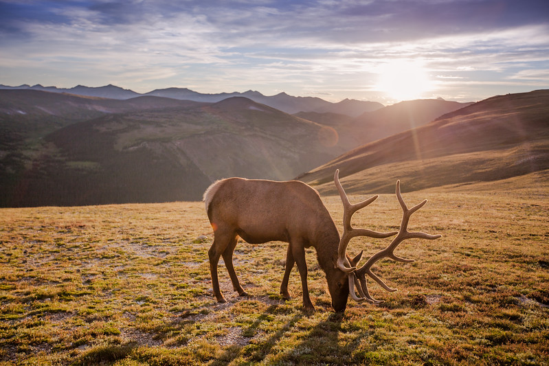 I usually don't focus on wildlife, but I just couldn't pass this one up. Taken high in the tundra in Rocky Mountain National Park