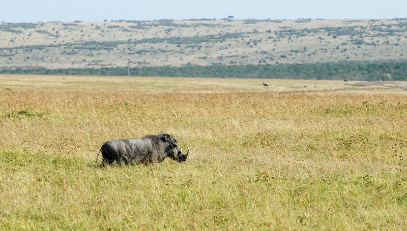 Rhino wannabe