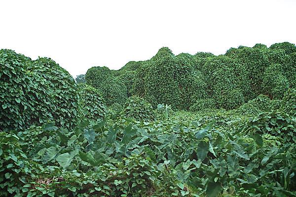 Vines and other invasive vegetation.