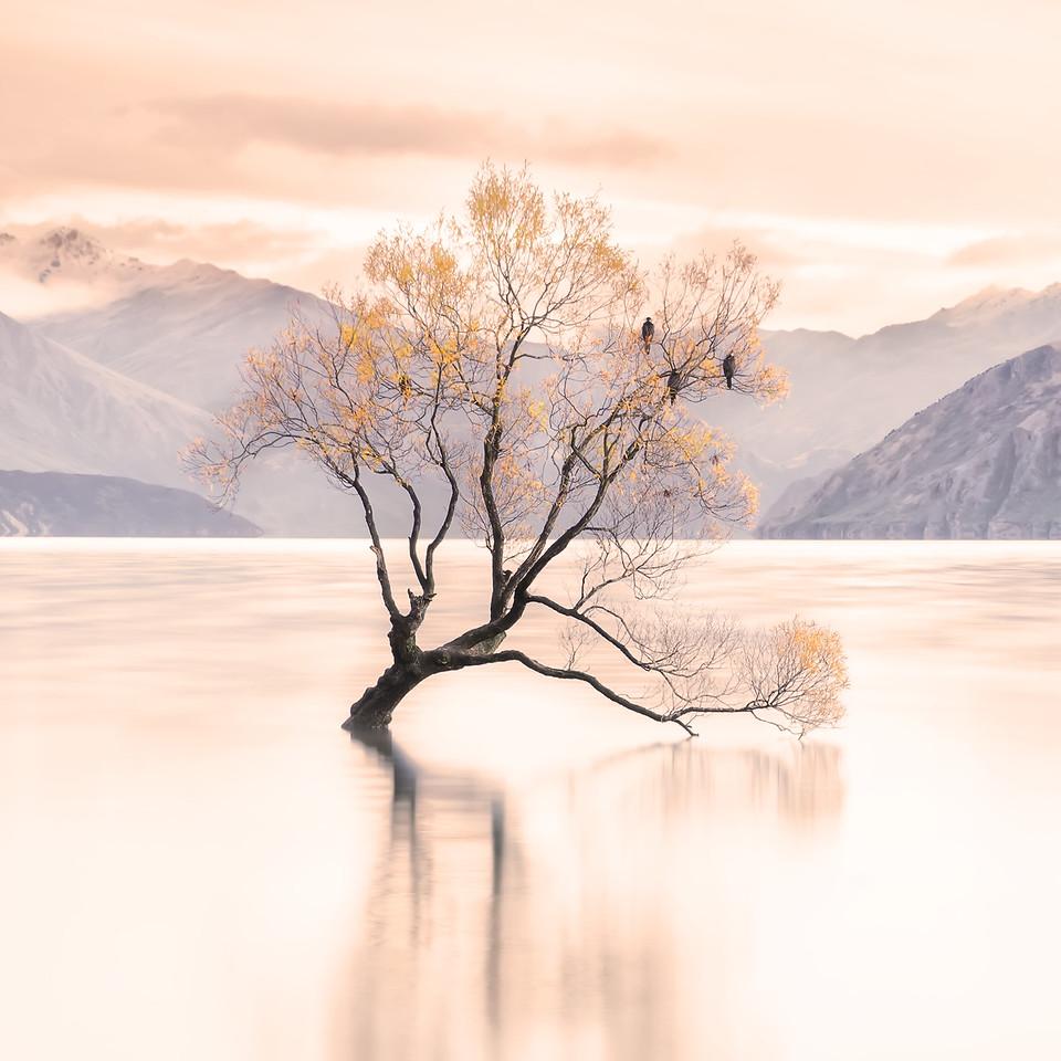 New Zealand, travel, explore, photography