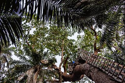 Tree house Lekki Conservation Center Lekki Lagos Nigeria.
