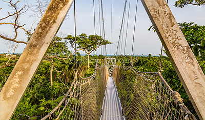 A section of the canopy walkway Lekki Conservation Center, Lekki, Lagos Nigeria. A view of the atlantic ocean in the distance.