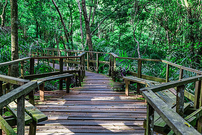 Boardwalk rest station Lekki Conservation Center Lekki Lagos Nigeria.