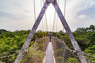 A section of the canopy walkway Lekki Conservation Center, Lekki, Lagos Nigeria . View above the tree top.