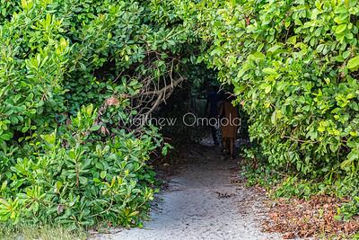 Entrance to the mangrove forest Lekki Conservation Center Lekki Lagos Nigeria.