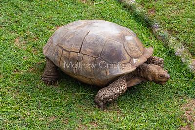 Old Tortoise Lekki Conservation Center Lekki Lagos Nigeria