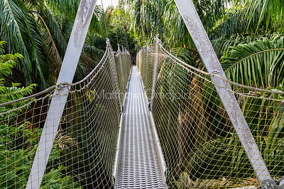A section of the canopy walkway Lekki Conservation Center, Lekki, Lagos Nigeria