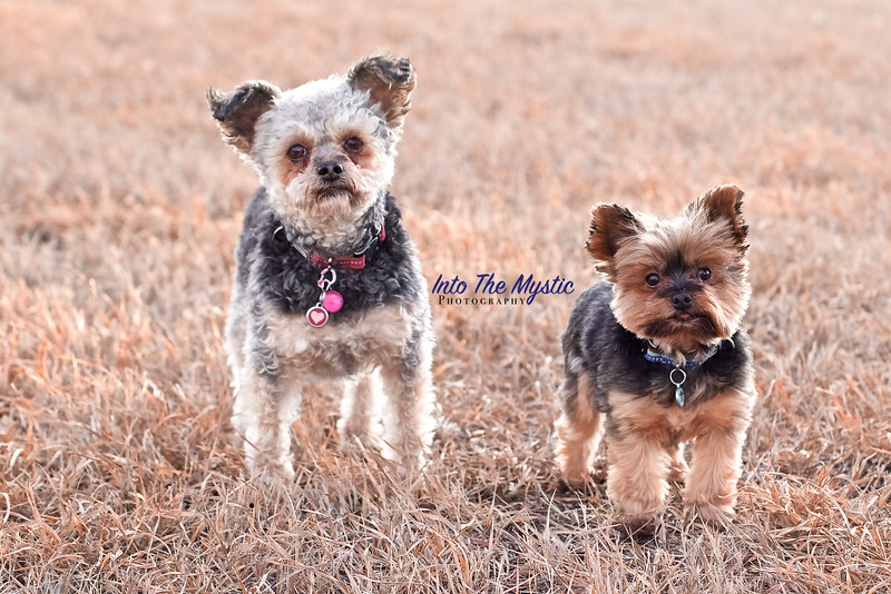 Dog Photo Session near Crossfield Alberta