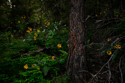 Forest near Frenchtown, Montana