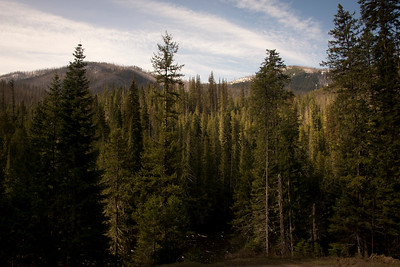 Nez-Perce Clearwater National Forest