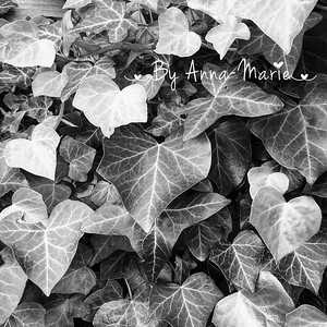 Macro Photography Bristol
