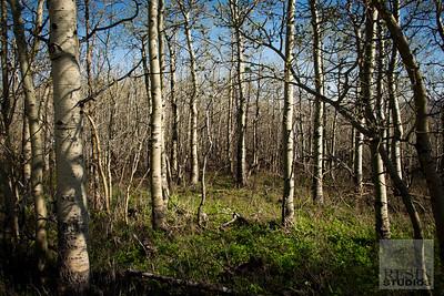 Kiawa Forest