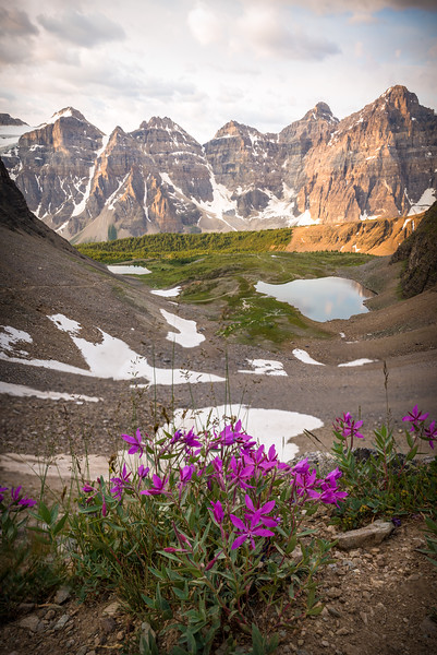 Gorgeous wildflowers along the way up Sentinel Pass with Minnestimma Lakes below.