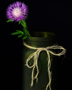Flower in the mason jar
