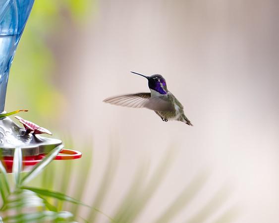 hummingbird 11 12 17-8645