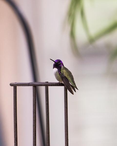 hummingbird 11 12 17-8653