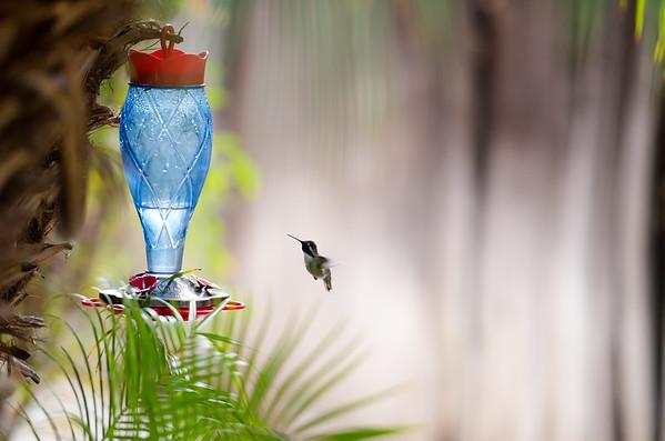 hummingbird 11 12 17-8647