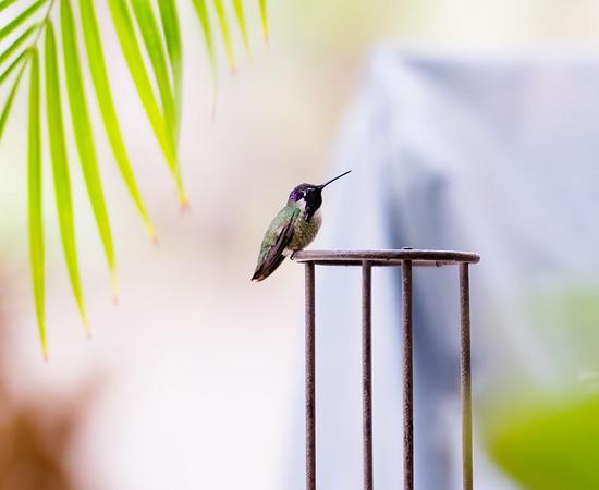 hummingbird 11 12 17-8599
