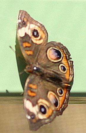 Butterfly exhibit in Arizona near Phoenix Zoo