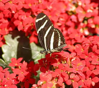 IMG_0069 BUTTERFLY