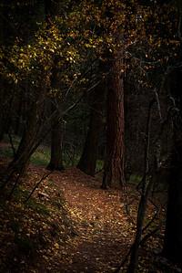 Barmeyer Trail