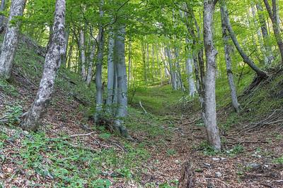 Forest, Plitvice Lakes National Park, Croatia