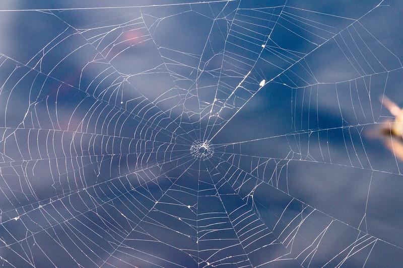 Spider web, Ciénaga de Zapata, Cuba
