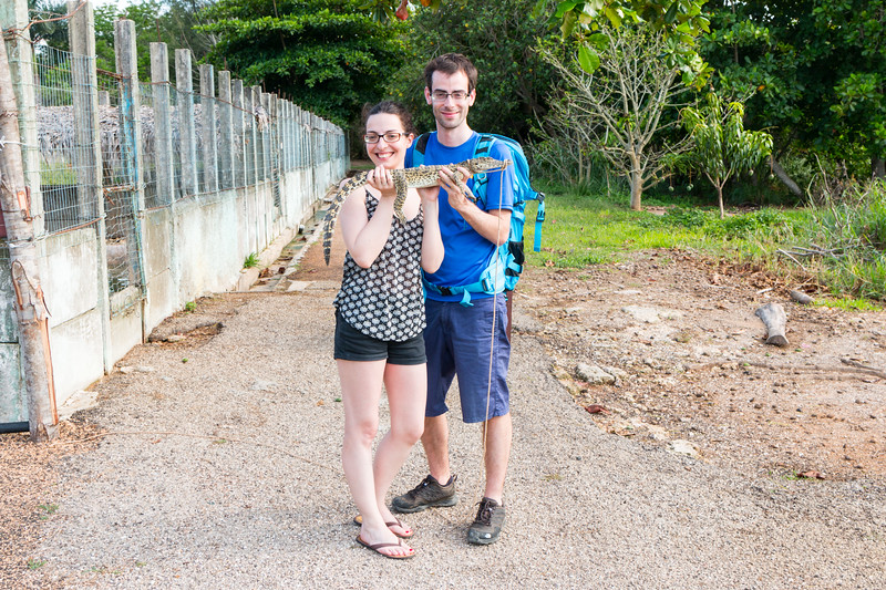 A tiny crocodile, Península de Zapata, Cuba