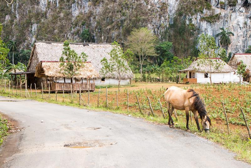 Farm, Valle de Viñales, Cuba