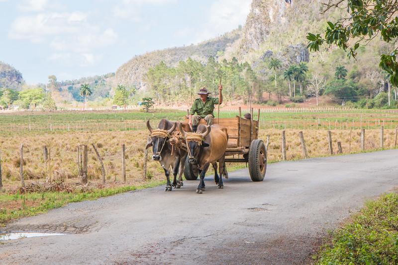 Cuban farmer, Valle de Viñales, Cuba