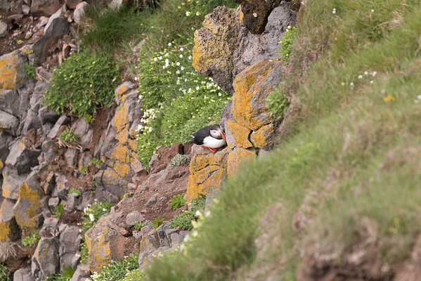 Puffin Hole