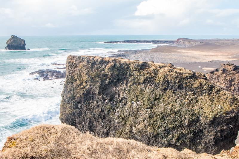 Bird cliff in Reykjanes, Iceland