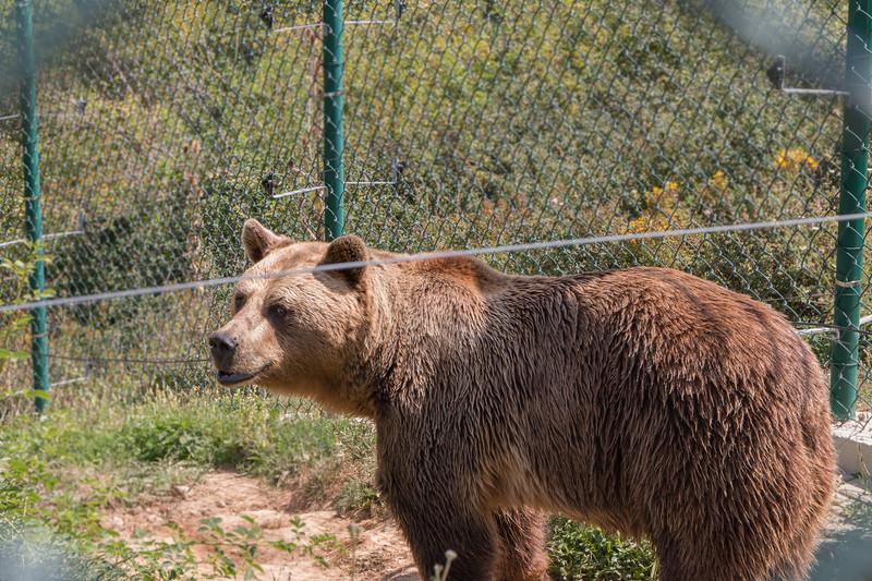 Bear at Pristina Bear Sanctuary, Kosovo
