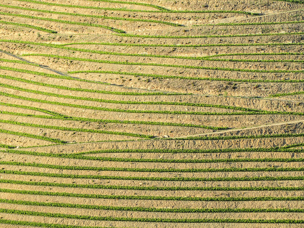 Douro terraced vineyards