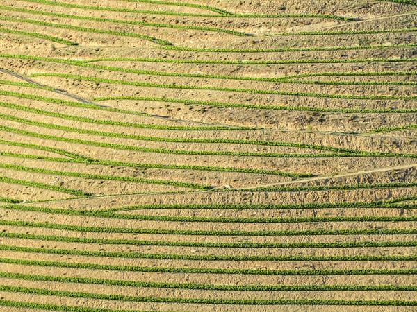 Douro terraced vineyards
