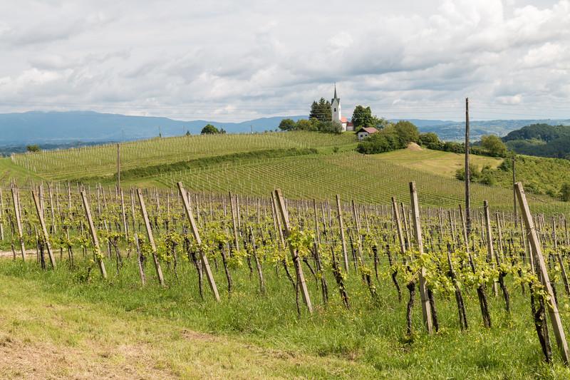 Vineyards, Slovenia