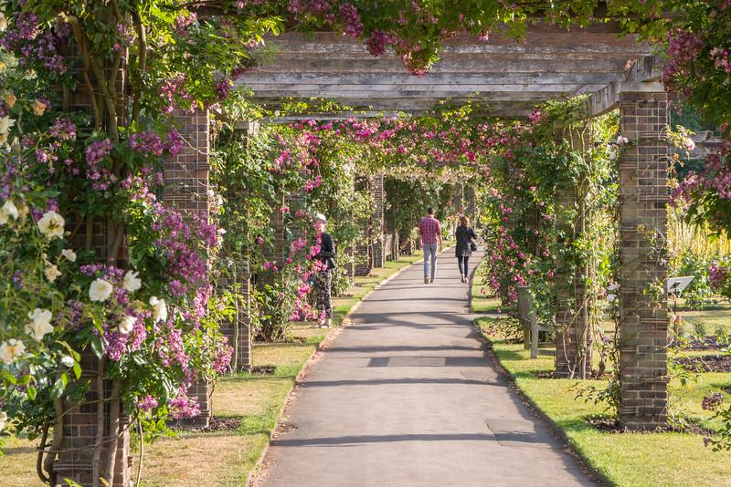 Elegant Rose Pergola, Kew Gardens, London