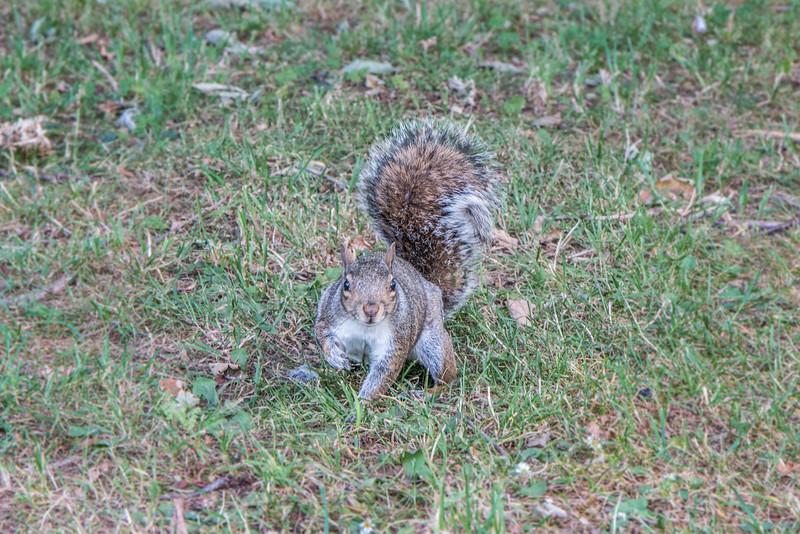 Squirrel, Kew Gardens, London