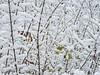 Lake Tishomingo 006, 12/29/2012