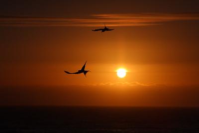 Sunset Ballet