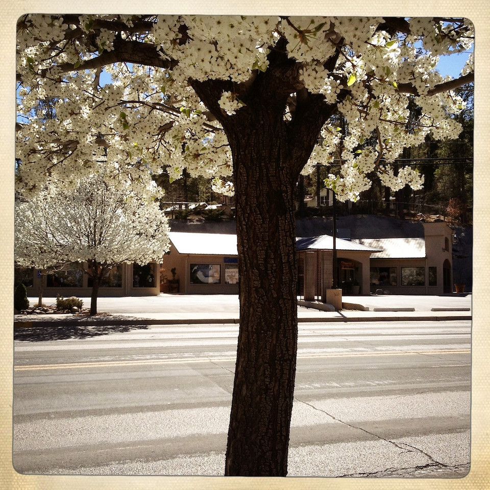 """SUCCESS IS A MINDSET - 11 April 2013<br /> <br /> Trees in Bloom - Ruidoso, New Mexico<br /> <br /> """"I was watching a TED talk with a subject about the mental qualities of very successful athletes. In this case, the speaker brought up example after example of sport legends at work in which a simple personal perspective seemed to lead them to accomplish extraordinary things. This speaker introduced a theory: it was about """"belief."""" <br /> <br /> After viewing this video, I considered my own career. When might belief have affected what I had accomplished? As they say, hindsight is 20/20. Looking backwards is always correct. What I found was that I rarely felt like I wasn't going to succeed. Sure, anxiety was present before taking that test or being evaluated. But, I never thought, """"I can't do this."""" I always felt success was a matter of just getting it done.<br /> <br /> Not everyone is like that. Some people, during checkrides, freeze up and snatch defeat out of the jaws of victory. I had one student at Test Pilot School who I personally hooked--i.e., failed -- on three of the curriculum's four checkrides. He was a great kid but he could not take a checkride to save his life.<br /> <br /> After the debrief for the third fail, he was sitting across the table from me with eyes lowered, totally dejected, and said, """"Sulu, maybe I'm not cut out for this stuff."""" That made me almost laugh because I saw in him tremendous potential to succeed as a test pilot. He simply did not do well in checkrides. I told him """"You'll do fine. You need to get out of Test Pilot School. Then, you'll be great."""" After graduation and years of active testing, my student turned out to be a great and capable test pilot, easily overcoming the bumps he encountered at TPS.<br /> <br /> In so many ways we are our own worst enemies when doing challenging things. A lack of confidence or natural expectation to succeed may be the difference between success and failure. Being distracted by a potential for fail"""
